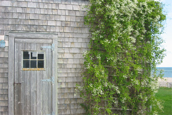 Weathered_Visit_Cape_Cod