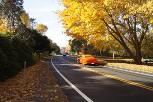 Autumn On The Old Kings Highway