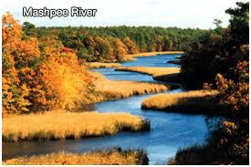mashpee-river